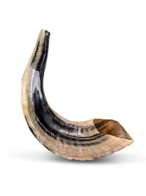 Шофар (бараний рог) для трубления | 32-37см | made in Israel